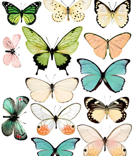 image about Butterfly Printable known as Contemporary Butterfly System 2 Education Mommies